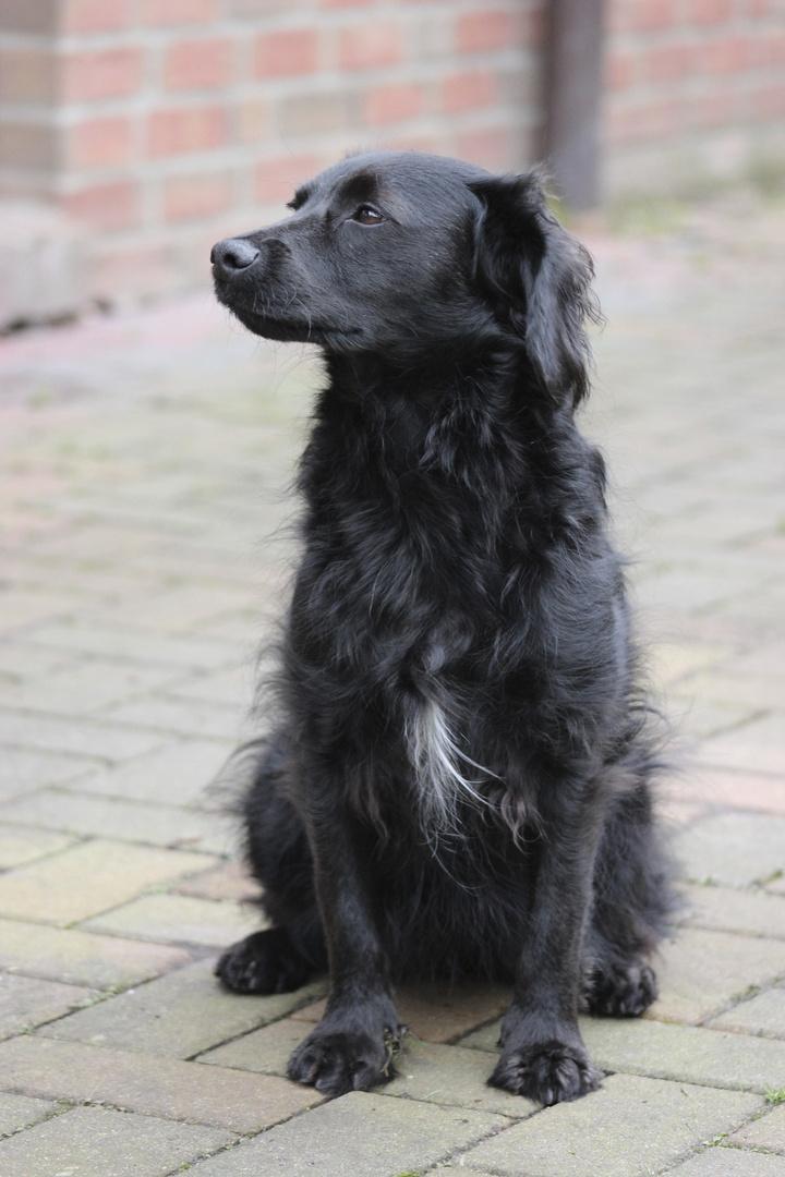 Mein zweiter Hund........., meine Pami