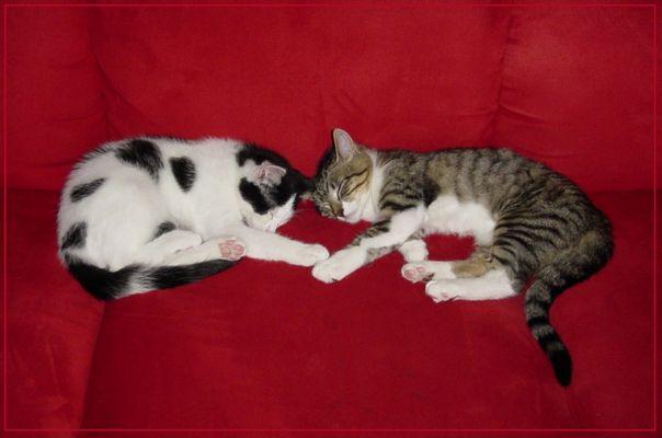 Meine 2 Katzen!