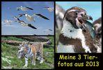 ~ Meine 3 Tierfotos in 2013 ~