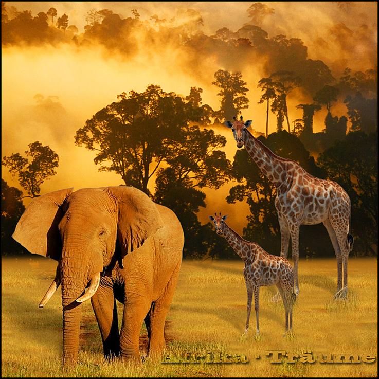 Meine Afrika-Träume...