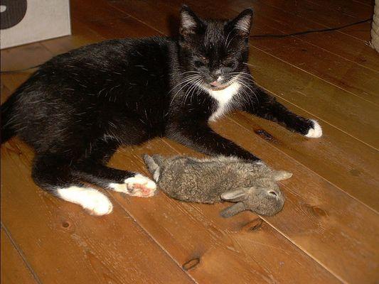 meine alte katze