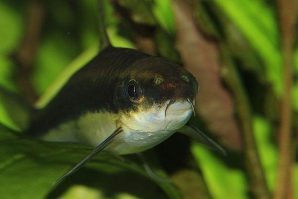 Meine Aquariumbewohner4