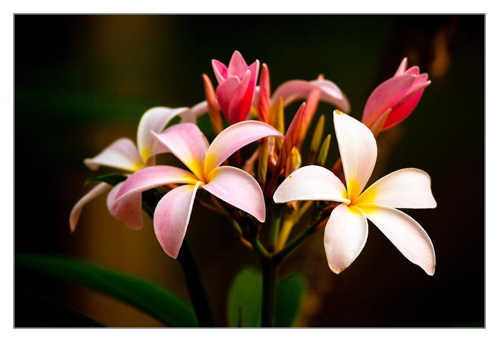 Meine asiatische Lieblingsblüte #3
