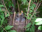 """meine """"Baby-Vogal"""" im Nest ..."""