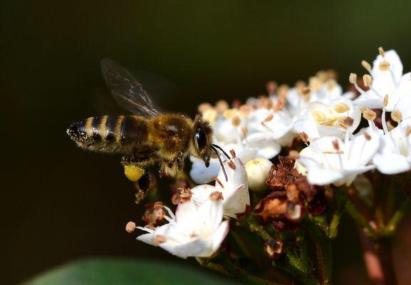 #...Meine Biene......#
