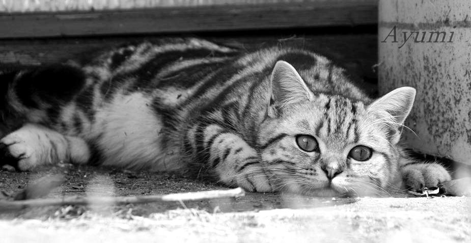 Meine BKH Katze Fifi schonwieder