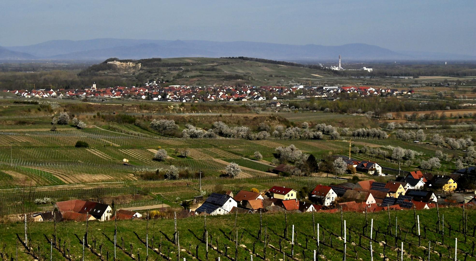 Meine blühende Heimat ~ 01.04.2012