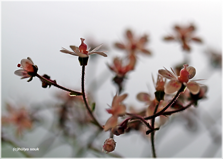 meine Blumen 2