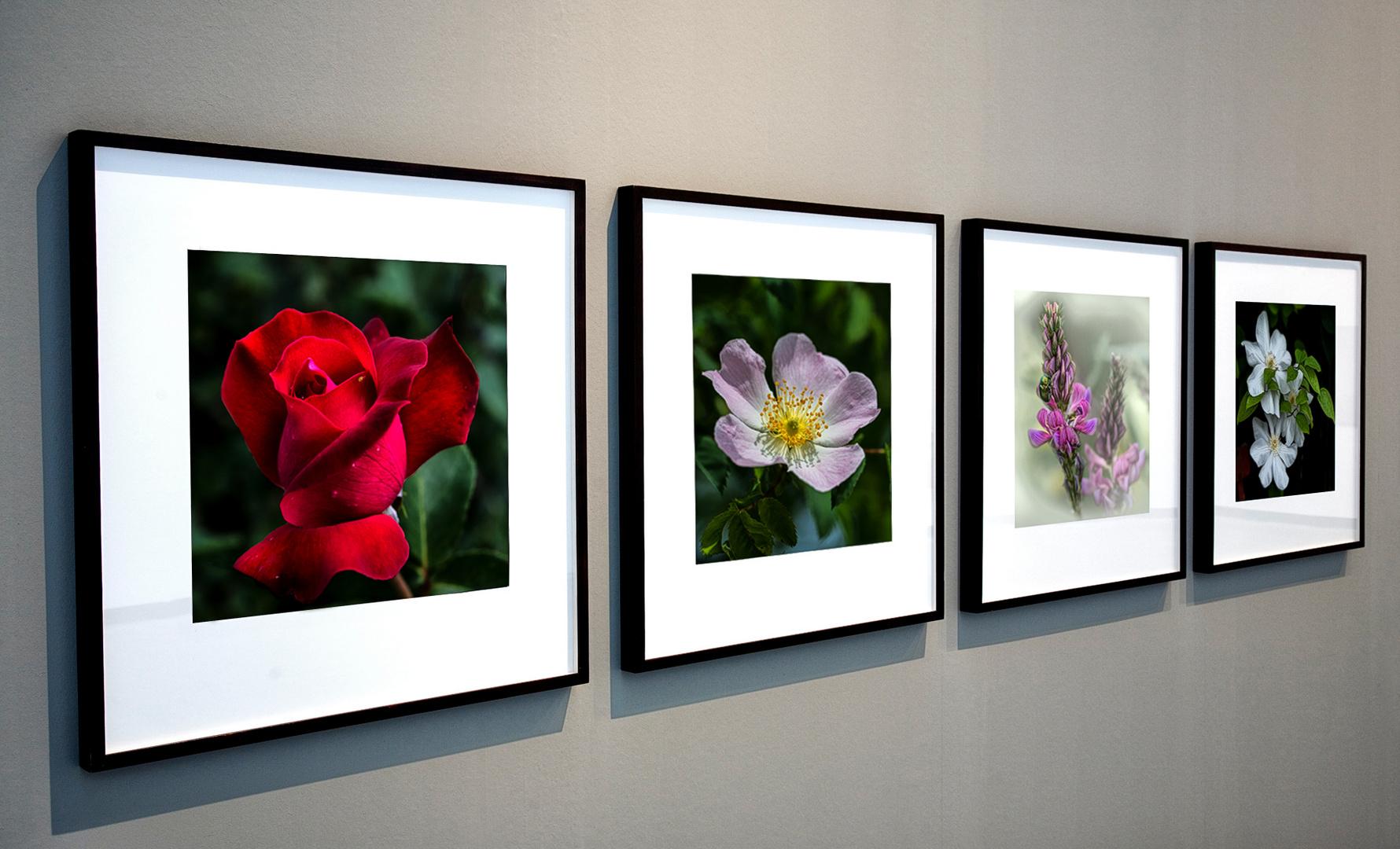 Meine Blumenbilder einmal anders dargestellt
