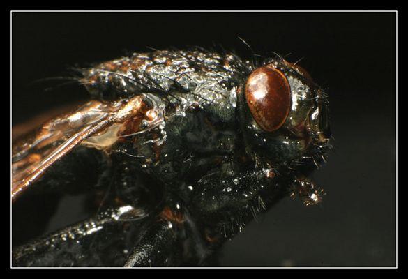 Meine dicke Monster-Fliege