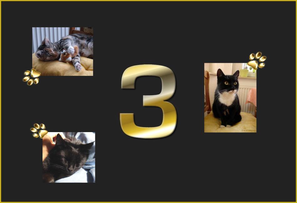 Meine drei Schönsten...