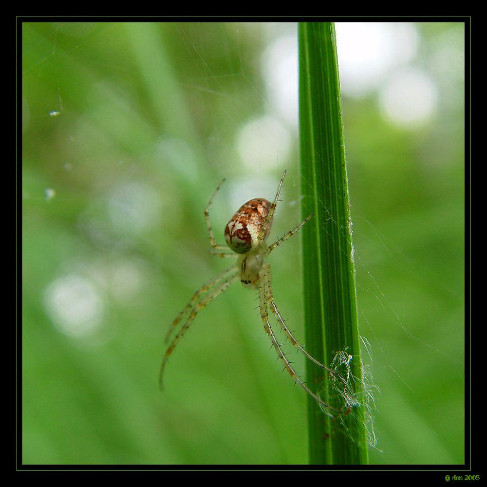 meine eine kleine spinne