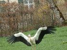 Meine erste Begegnung mit einem Storch