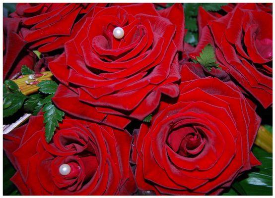 meine erste D60 Rose