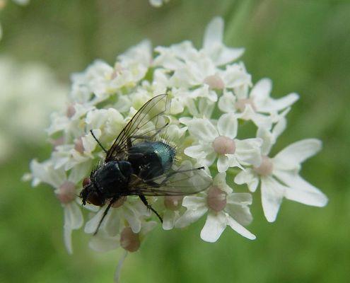 meine erste Fliege ;)
