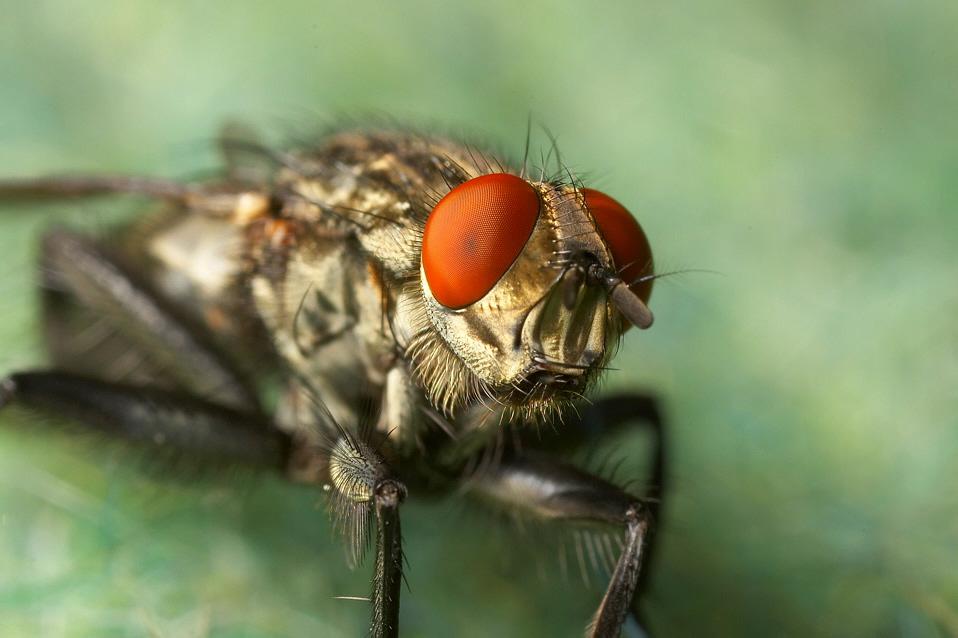 meine erste Fliege des Jahres ....