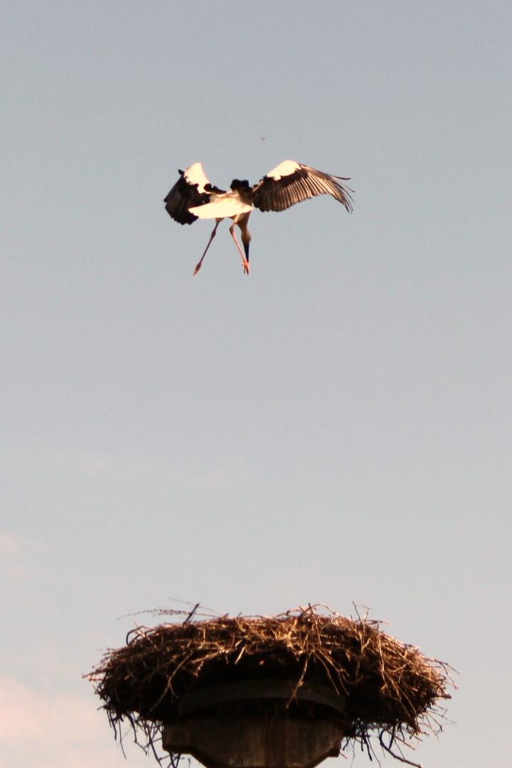 Meine erste Landung