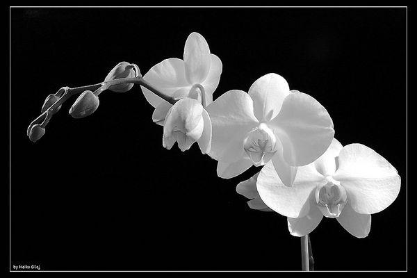 Meine erste Orchidee