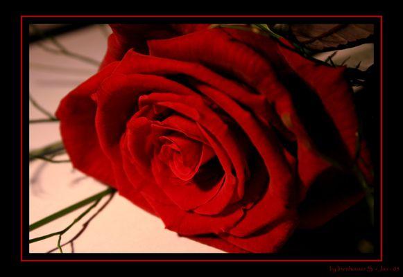 Meine erste Rose :)