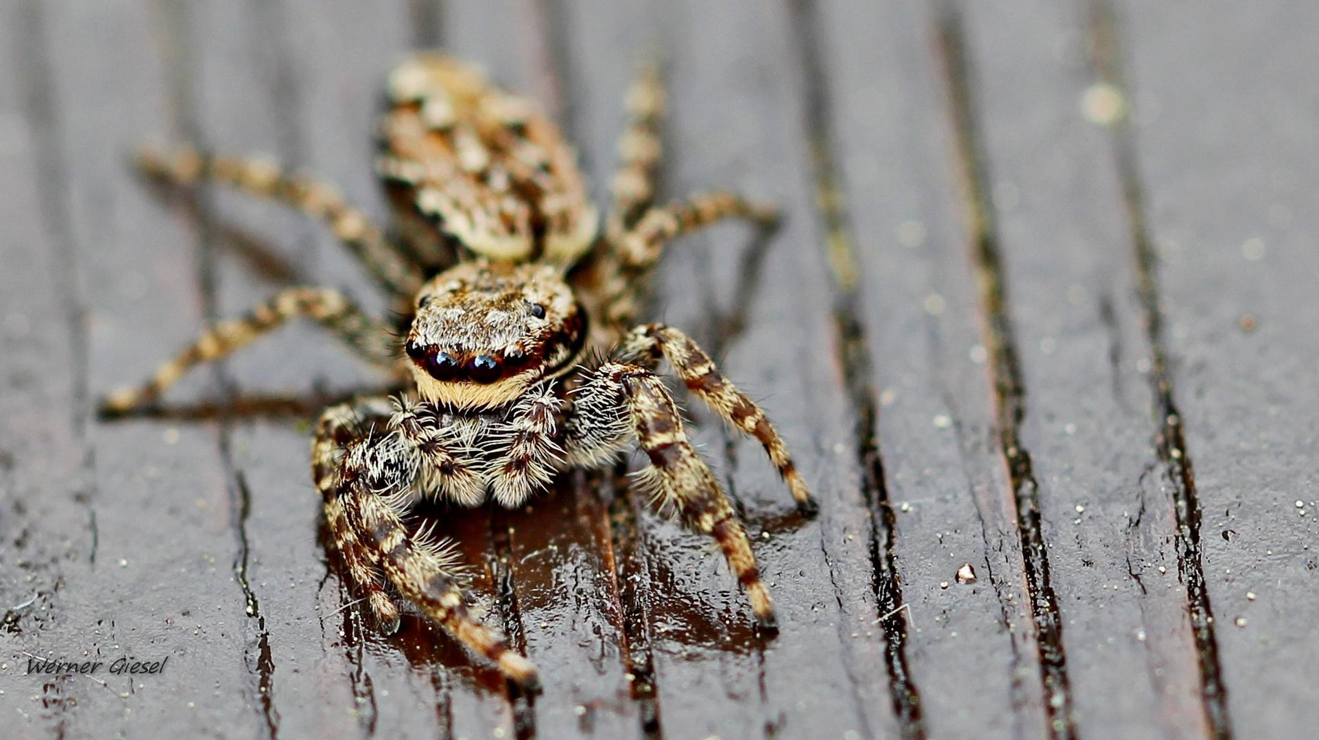 Meine erste Spinne..