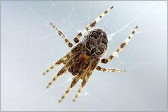 Meine erste Spinne