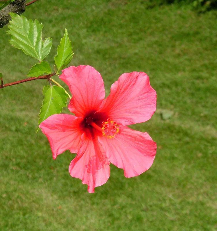 Meine erstes Blütenfoto