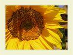 Meine Farben, meine Lieblingsblumen...