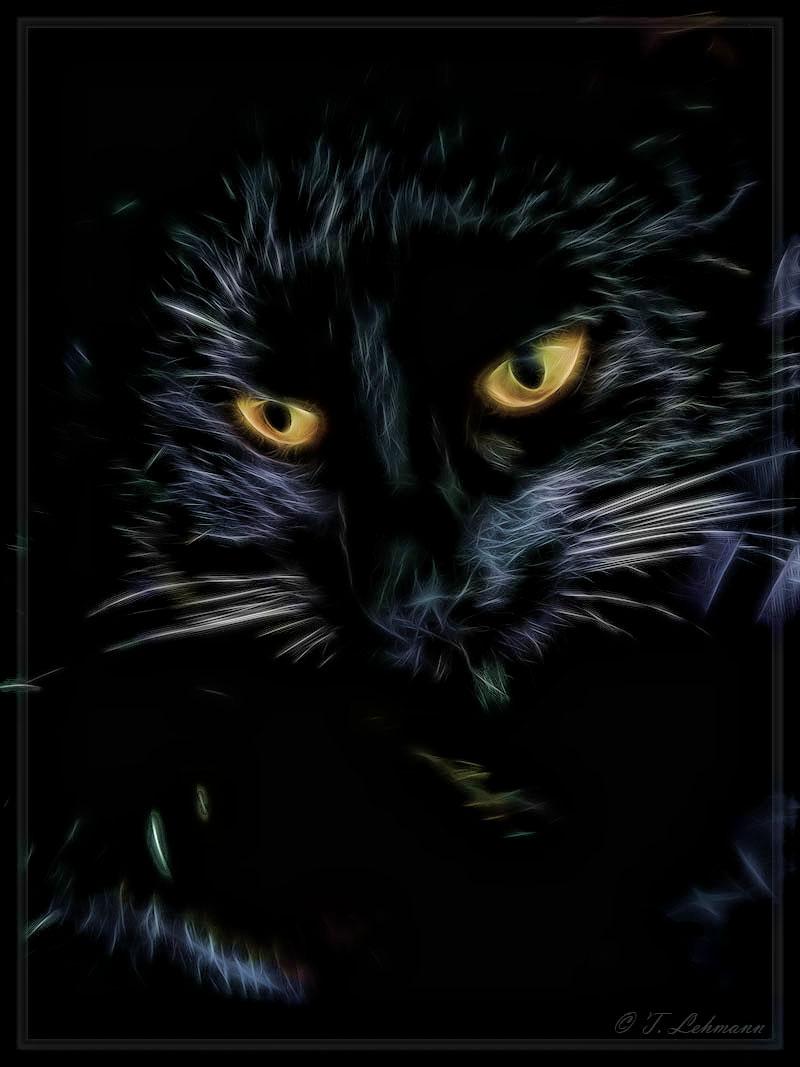 Meine freche und doch liebe Elli eben eine Katze und absolut liebe Fellnase.