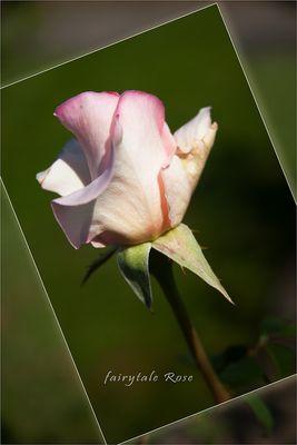 meine Gartenrose