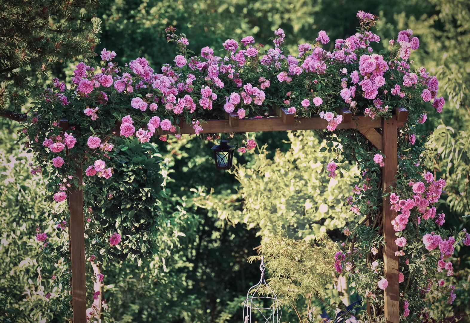 Meine Gartenschau Nr.7