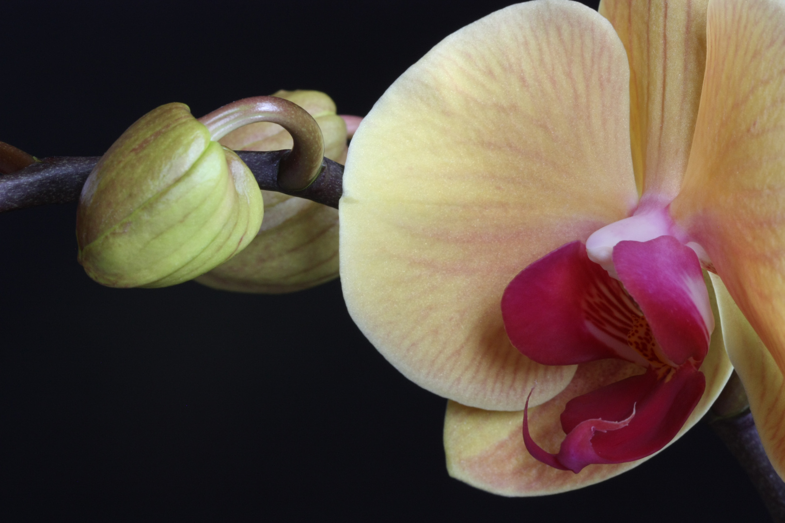 Meine gelbe Orchidee