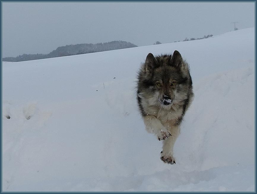 meine geliebte Wölfin