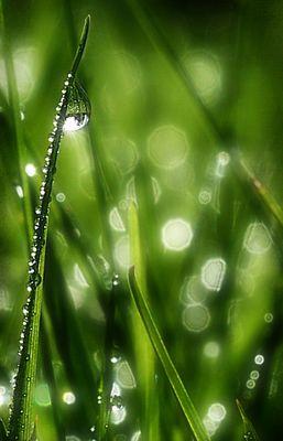 meine grüne Welt