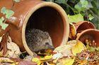 Meine Herbstdeko. :o)