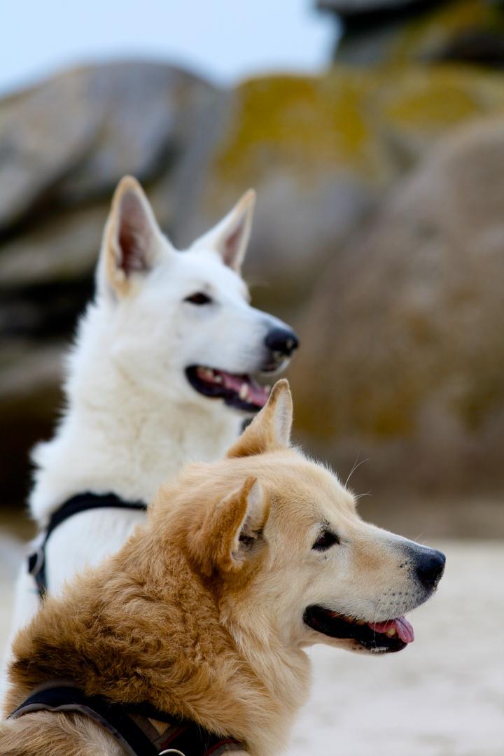 meine Hunde