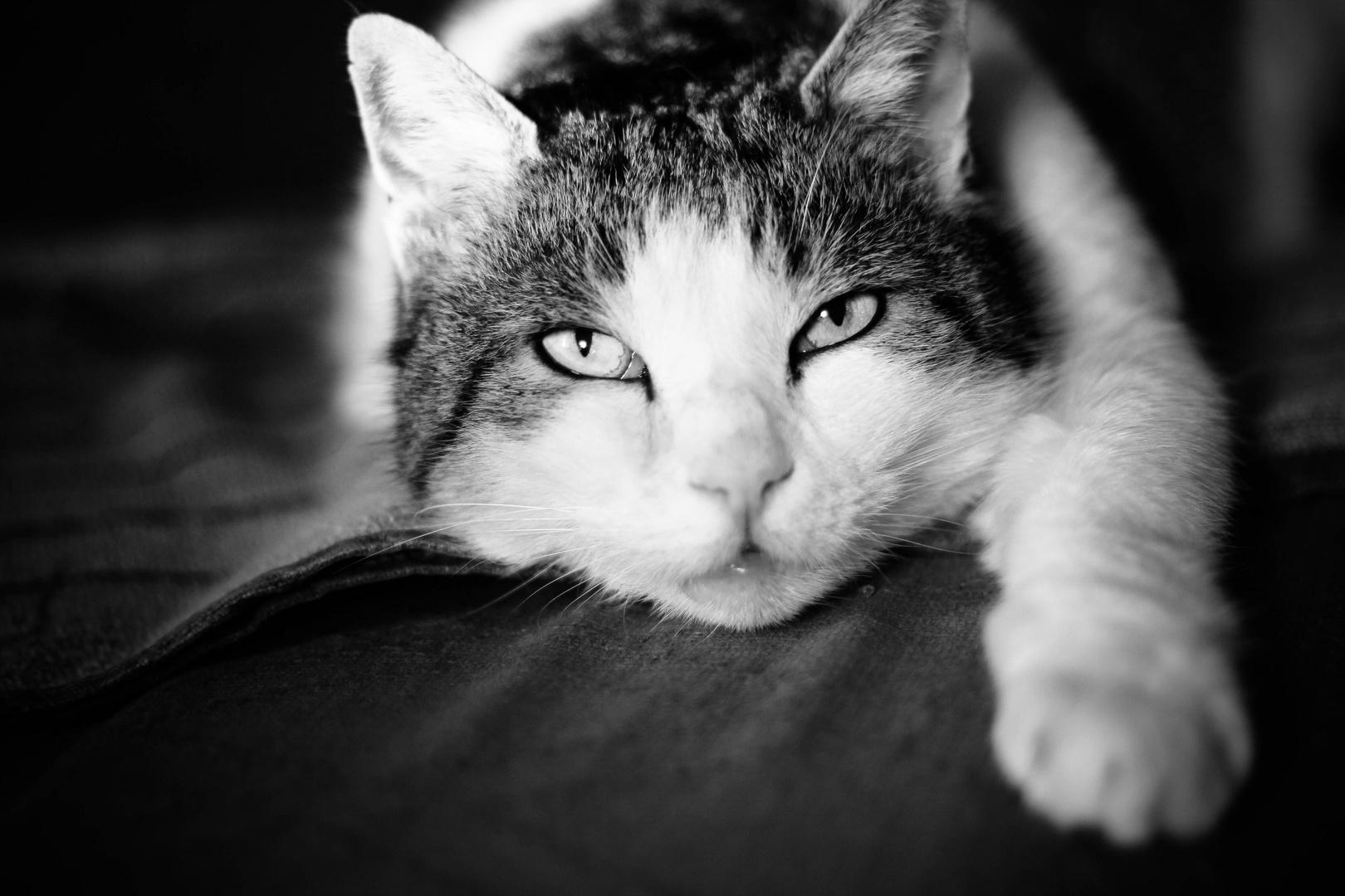 Meine Katze :)
