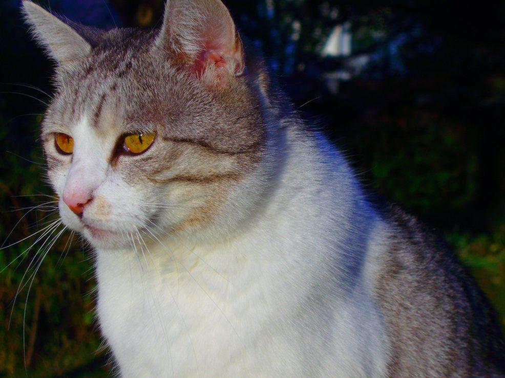 Meine Katze,