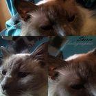 Meine Katze'