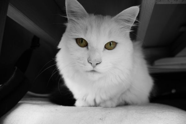 meine katze