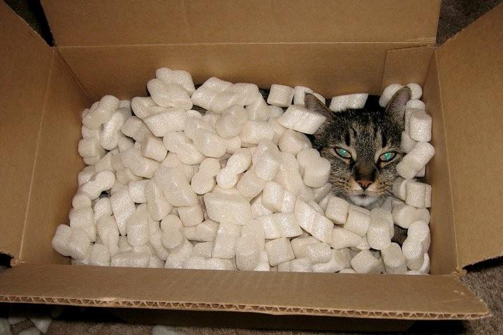 meine Katze fertig zum Versand