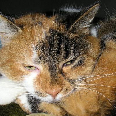 ...meine Katze ist die Schönste!