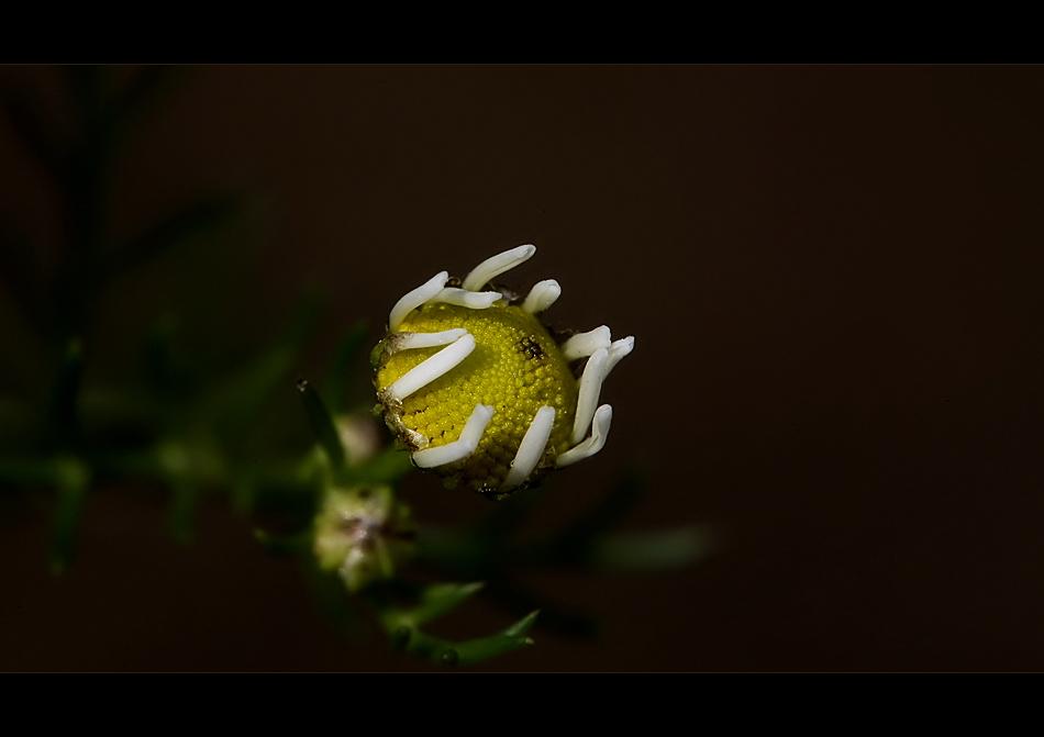 ...meine kleine blüte......