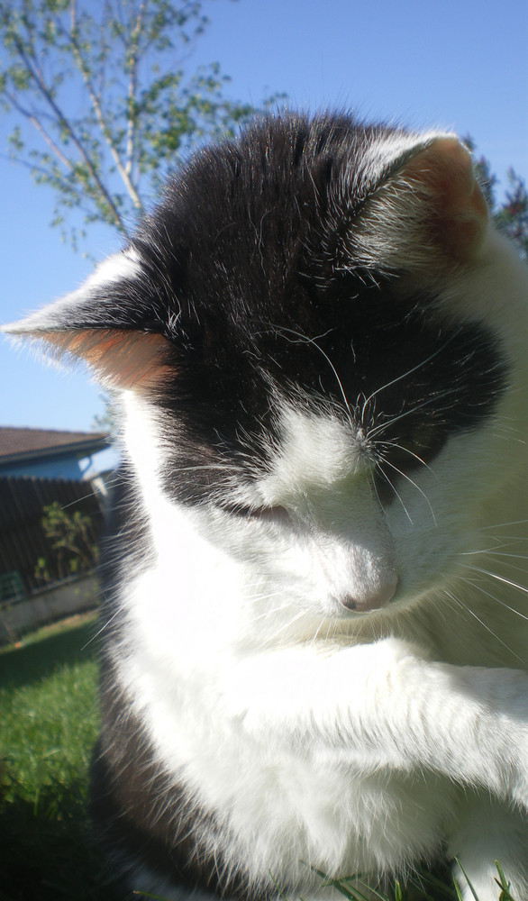 meine kleine Katze