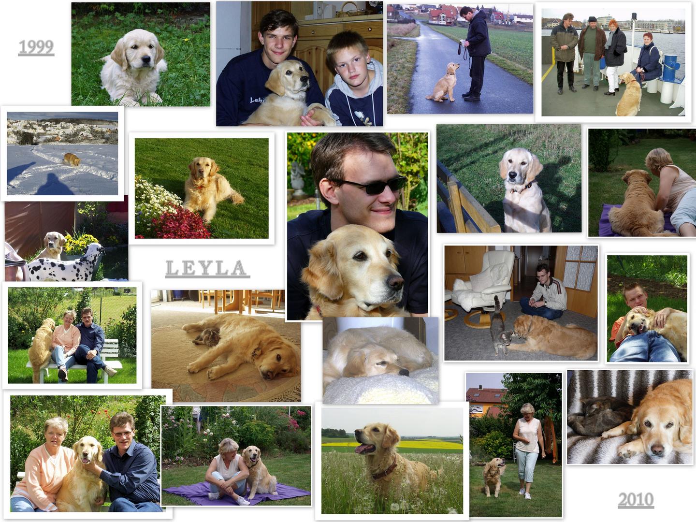 Meine Leyla                                 (1999 - 2010)