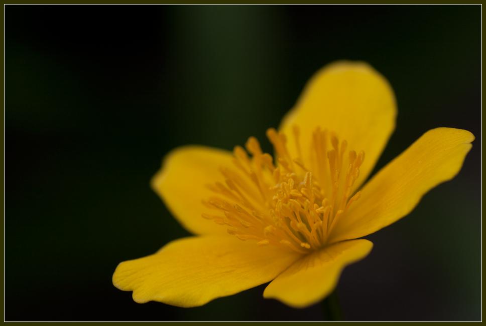 Meine Lieblingblume am Gartenteich-