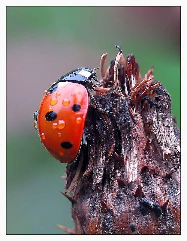 Meine Lieblings Käfer.