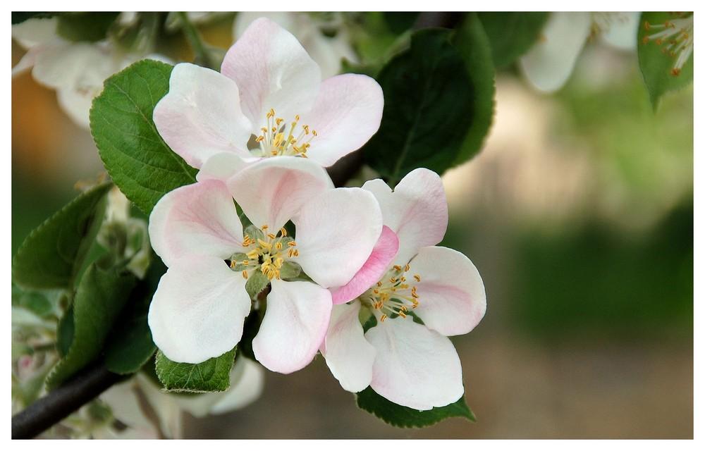 Meine Lieblingsblüten
