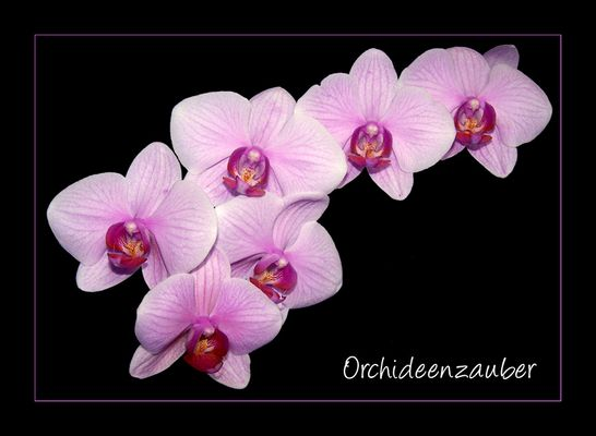 Meine Lieblingsblume