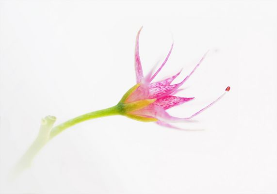 Meine Lieblingsblumen ...