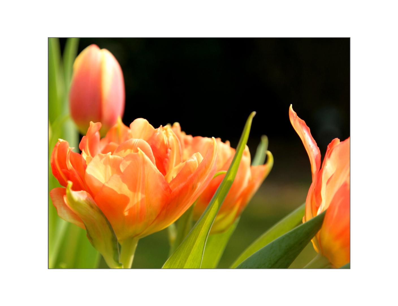 Meine Lieblingsblumen .......